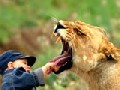 I Dare to Pull the Lion's Tooth!