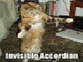 Cats and Invisible objects