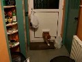 Cat Vs. Cat Door