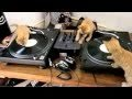 Kittens on DJ Decks