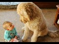 /62c25c4489-fun-challenge-try-not-to-laugh-funny-dogs-and-kids