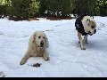 Dogs Playing In Slow Motion