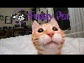 Funny Animal Video - Animal Funny - Funny video compilation