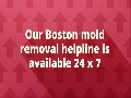Mold Removal in Boston MA