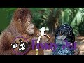 Best funny animal videos compilation 2015