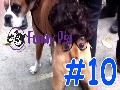 /fed79ea9dc-a-funny-animal-videos-compilation-2015-10