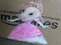 Hamster Dresses Up in Cardboard Cutouts