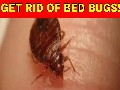 /85f4eb8a27-home-remedies-to-get-rid-of-bed-bugs-fast