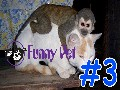 /6d12dd77f7-animal-videos-dog-afraid-of-cat-so-cute-funny-animals
