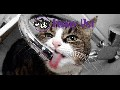 /3015dd3d09-funny-pet-compilation-march-2015-new