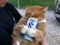 /8a2940b723-my-cat-enjoying-a-beer