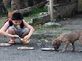 /a61a0aaafd-young-boy-feeds-starving-stray-dogs-in-his-spare-time