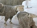 http://www.inspirefusion.com/sheep-sculptures-made-from-rotary-telephones/