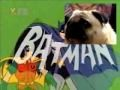Pug sings Batman theme