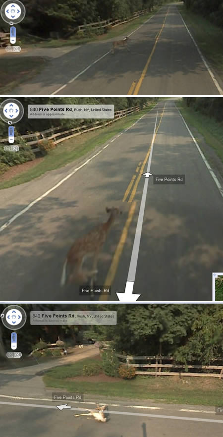 Google killed Bambi