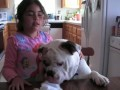 Cutest English Bulldog Video