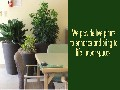 /e244db8f71-indoor-plants-for-office-reception-areas-board-rooms