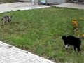 Cat Vs. Dog: Epic Standoff...
