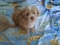 /8532a88a70-cutest-puppies-compilation