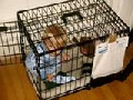 Oh, baby imprisoned in cage - WTF Parents