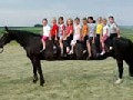 Longest Horses in the World - So Funny