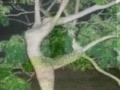 /89a16811cb-plants-gone-bad-hilarious-video-of-nature