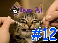 /83c939bf17-best-funny-animals-compilation-november-2015-12