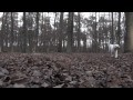 /09d4832dec-johnny-lagotto-slowmotion