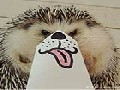 Marutaro The Cute Hedgehog Becomes Latest Internet Sensation