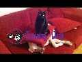 Animal Videos || Dog Afraid of Cat So Cute || Funny Animals