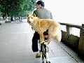 Cute Dog Pictures: Dogs Enjoy a Bike Ride!