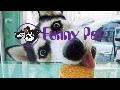 Funny Animals - Funny Dogs and Cat ,Funny Video - Funny Pran