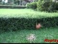 http://de.webfail.at/video/hund-springt-ueber-hecke-fail-video.html
