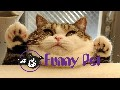 Best Funny Animals Vines compilation New