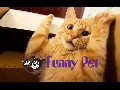 /694769e0a6-best-funny-animals-vines-compilation-new