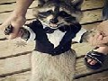 /36e6dd742c-raccoon-in-a-suit