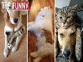/d8ba53e5ef-20-funny-photos-of-cats-sleeping-on-their-dog-friends