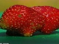 Guinea Pig Shaped Strawberry