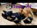 Funny Videos Funny Animal Best compilation 2015