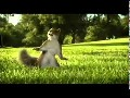 kit kat advert ( squirrel )