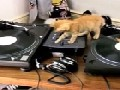 /0ea7678c33-tierische-djs-an-den-turn-tables