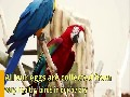 /9020927282-available-fertile-parrots-eggs-ostrich-and-parrots-for-sale