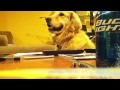 http://de.webfail.at/video/wie-man-einen-hund-gluecklich-macht-win-video.html