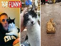 20 Of The Funniest I Don't Own A Cat Moments That Ever Hap