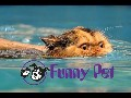 Funny Videos - Funny Cats - Funny Pranks - Funny Animals Vid