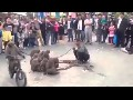 /4c871ca822-funny-monky-video-2014