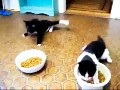 Funny drunk cats