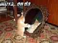 http://www.welaf.com/13448,mirror-mirror-who-is-the-cutest-cat.html