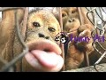 /3ff867efa3-funny-pet-compilation-2015