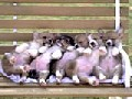 /5580411a4b-cute-sleeping-puppies-in-a-bench